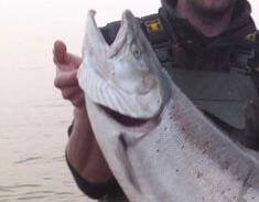 La truite de lac